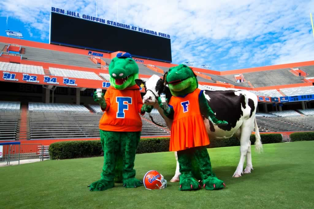 Florida Gators with a Cow
